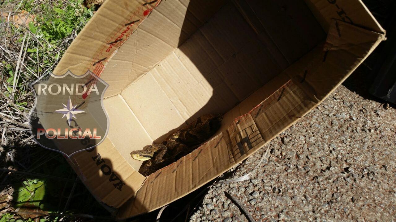 Bombeiros capturam cobra em residência no Bairro Aparecida
