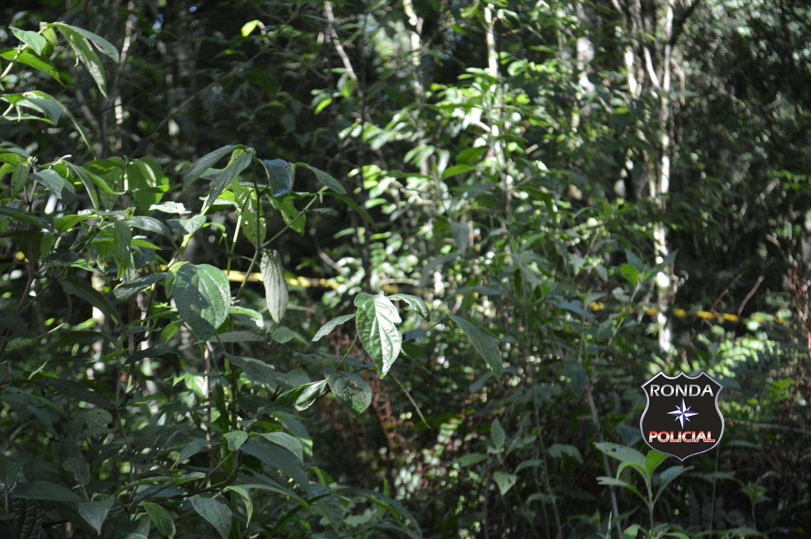 Corpo encontrado em decomposição amarrado em árvore pode ser de pastora desaparecida