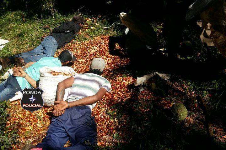 Trio é preso em flagrante roubando pinhão em propriedade rural