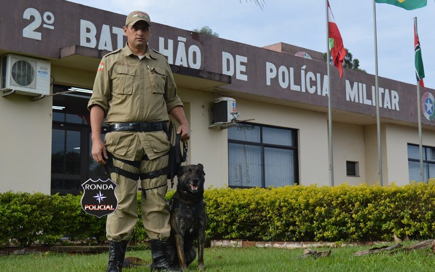 Cão Thor da PM de Xanxerê é o primeiro cão do Brasil a receber certificação Mantrailing nível 2