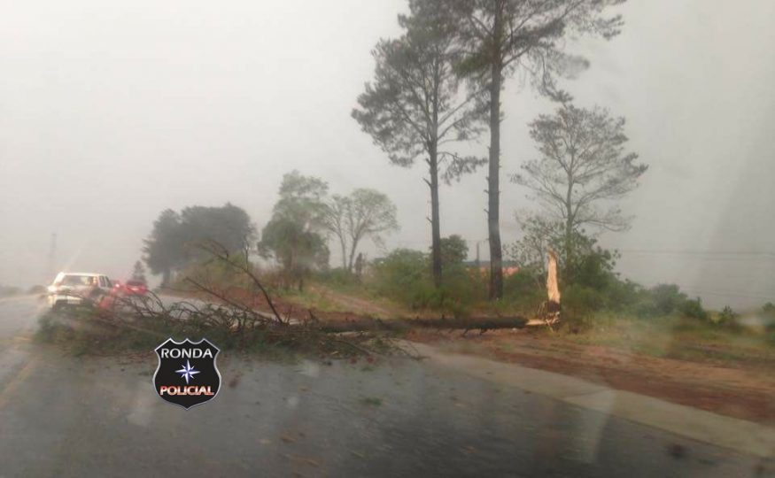 Queda de árvore deixa trânsito em meia pista na 282 em Xanxerê