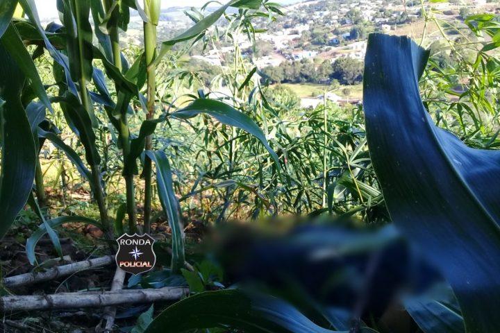 Jovem é encontrado morto em meio a plantação de milho aos fundos de residência