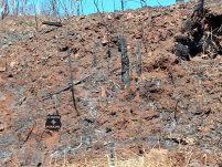 Moradora de Bom Jesus denuncia práticas recorrentes de queimadas criminosas de pastagem em sua propriedade