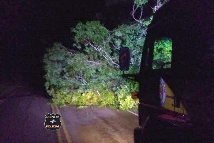 Queda de árvore bloqueia trânsito em rodovia durante a noite