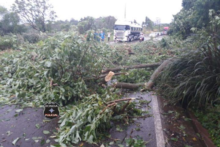 Queda de árvores bloqueia trânsito na SC-283
