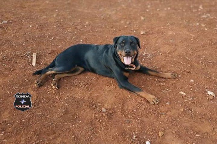 Procura-se por cachorra desaparecida no João Winckler