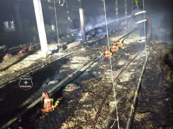 Três mil aves morrem em incêndio em aviário