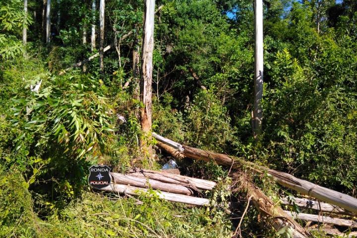 Trabalhador morre ao ser atingido por árvore em comunidade rural