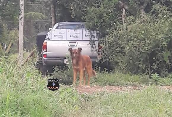 Camionete furtada de empresária em Ponte Serrada é localizada