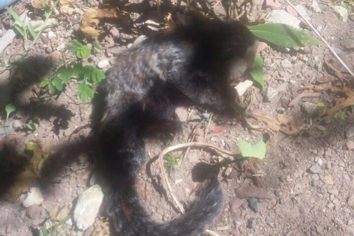 Macaco encontrado morto em Seara alerta para Febre Amarela