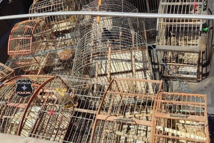 Homem é preso por manter pássaros silvestres em cativeiro