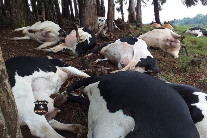 Bovinos morrem após serem atingidos por raio em propriedade rural