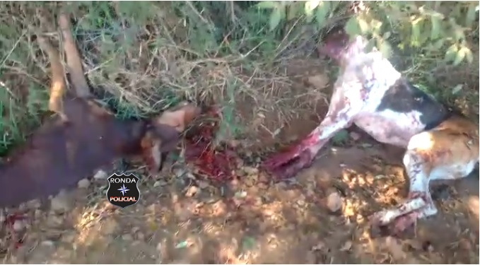 Cães são mortos a tiros a margem de estrada rural