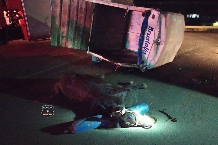 Cavalo morre e quatro pessoas, entre elas duas crianças ficam feridas em acidente na SC-480