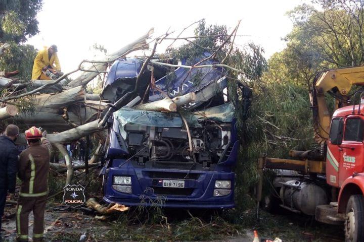 Carreta fica destruída ao ser atingida por queda de eucalipto e trânsito bloqueado no trevão de Irani