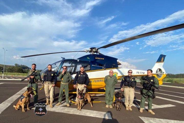Cães farejadores da PRF fazem treinamento de transporte aéreo na BR-163