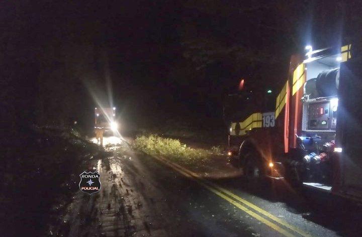 Queda de árvores mobiliza Corpo de Bombeiros para desobstrução de rodovia