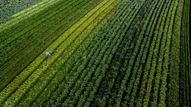 Governo do Estado investe R$ 36,9 milhões em apoio ao setor agropecuário catarinense
