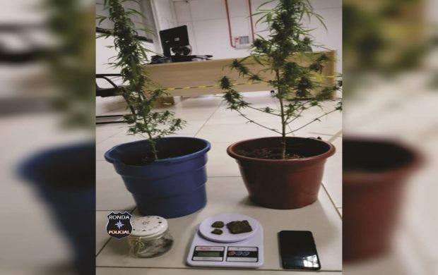 Jovem é preso em flagrante por posse de drogas e por cultivar pés de maconha em Xaxim