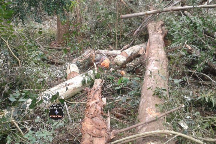 Trabalhador morre ao ser atingido por árvore no interior de Marema