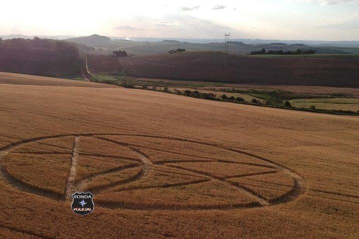 Marcas voltam a aparecer em meio a plantação de trigo em Ipuaçu