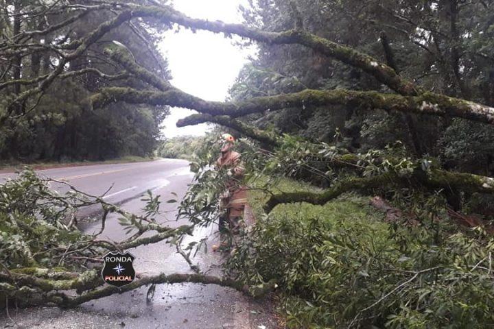 Queda de árvores deixa trânsito bloqueado na 282